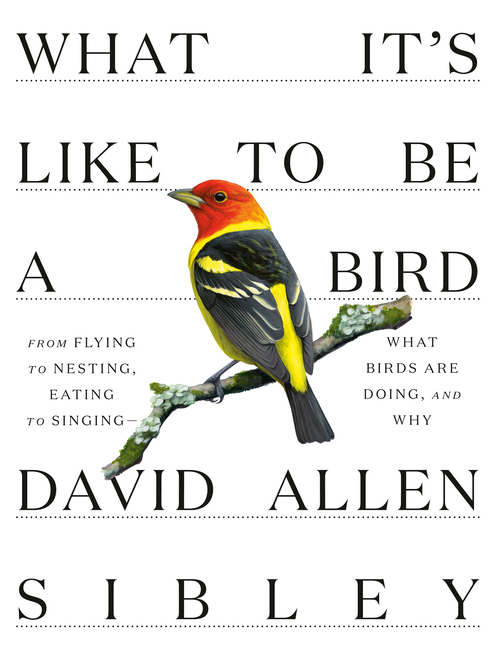 What It's Like to Be a Bird: From Flying to Nesting, Eating to Singing--What Birds Are Doing, and...